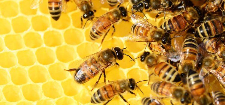 Comment parrainer une ruche ?